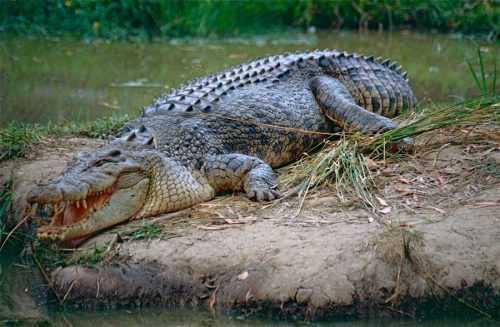 Какие виды животных самые опасные на Земле - список, характеристика и фото 10