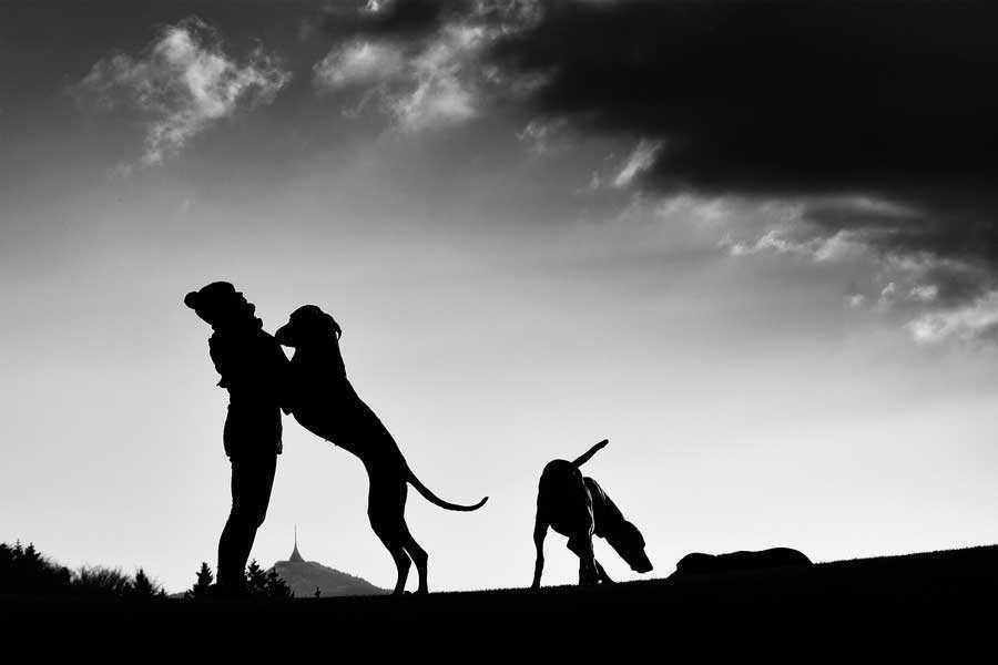 Как отучить щенка прыгать на людей