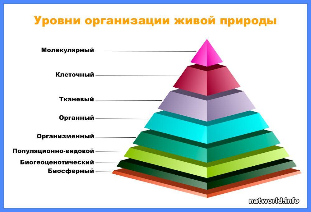Основные уровни организации живой природы - примеры, характеристика и таблица 2