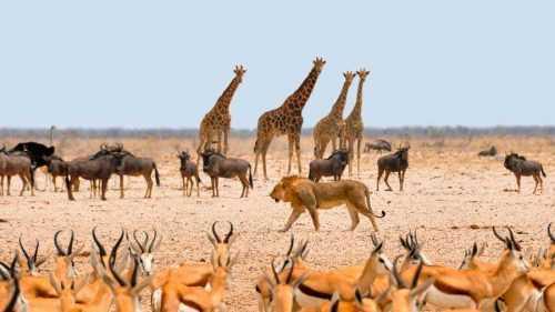 Экологические факторы окружающей среды - схема, виды, примеры и адаптация организмов 4