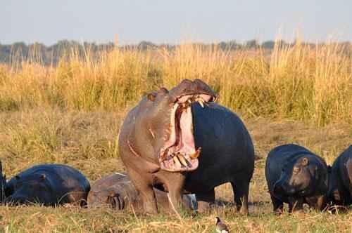 Какие виды животных самые опасные на Земле - список, характеристика и фото 2