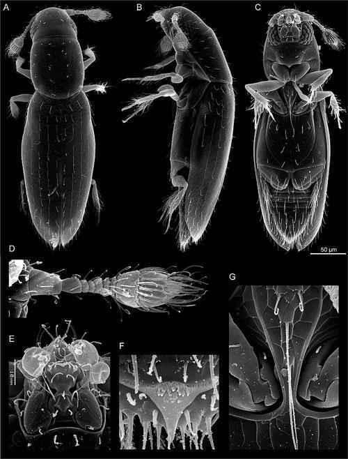 Какие виды животных самые маленькие на Земле - список, характеристика и фото 6