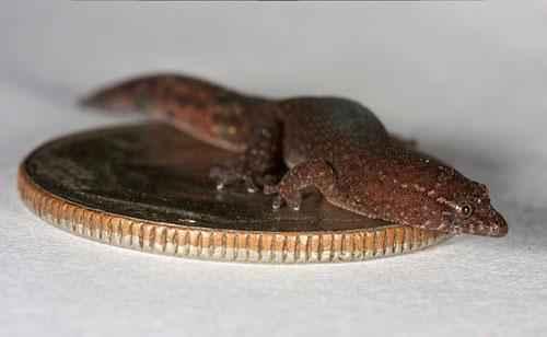 Какие виды животных самые маленькие на Земле - список, характеристика и фото 5