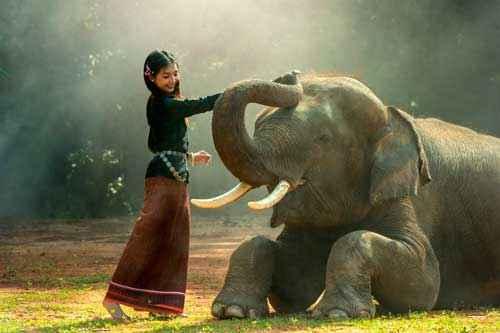 В каких странах мира какие животные считаются священными? 6
