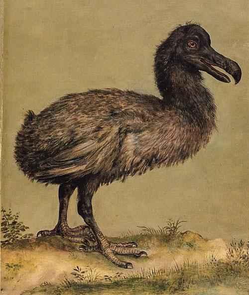 Какие животные занесены в черную книгу мира? Виды, фото и описание 2