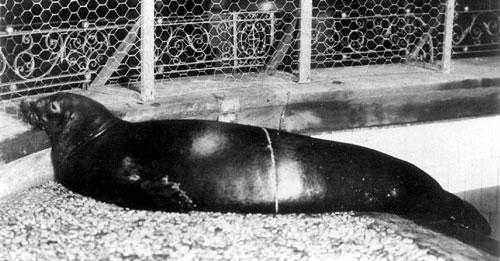 Какие животные занесены в черную книгу мира? Виды, фото и описание 19