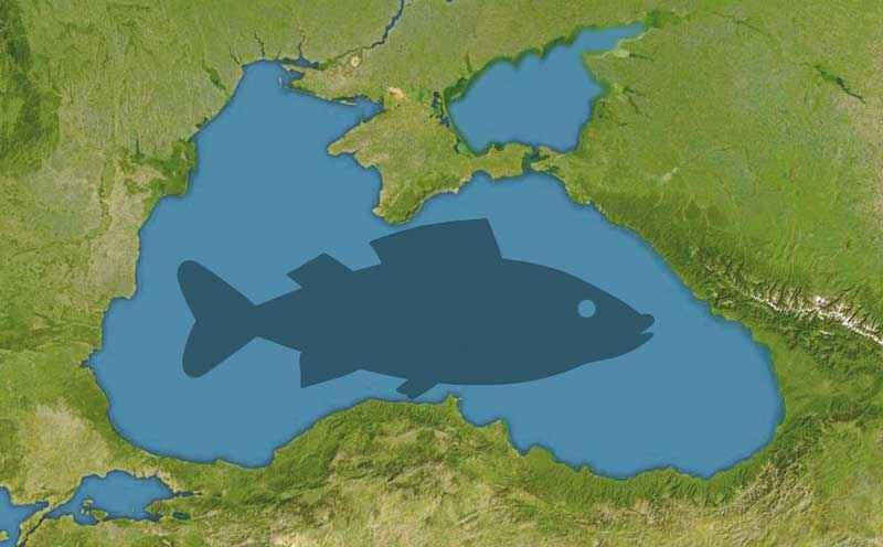 Черное море, карта, рыба, иллюстрация