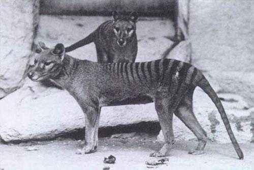 Какие животные занесены в черную книгу мира? Виды, фото и описание 18