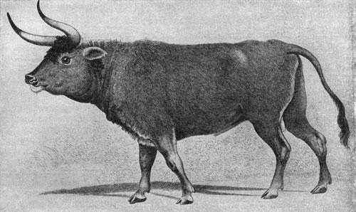 Какие животные занесены в черную книгу мира? Виды, фото и описание 9
