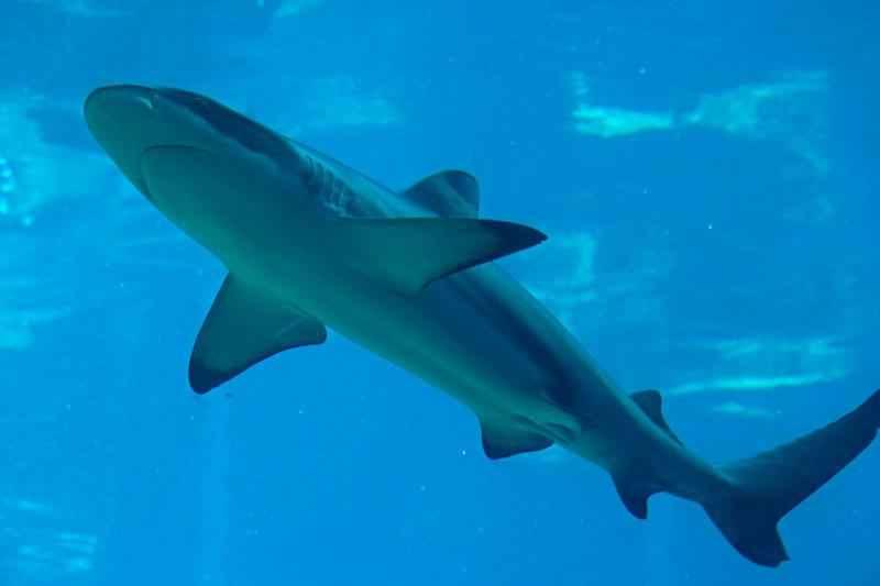 Какие виды рыб обитают в Красном море - названия, фото и характеристика 7