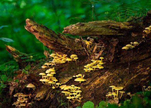 Из каких основных компонентов состоят экосистемы? 4
