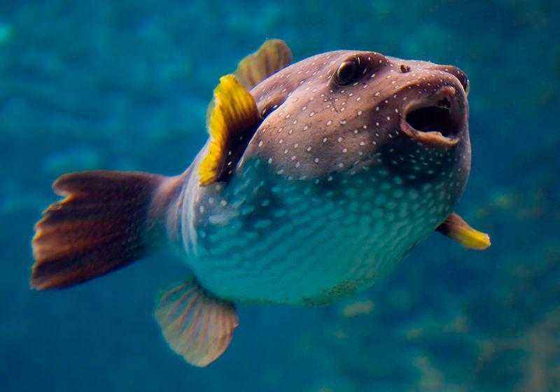 Какие виды рыб обитают в Красном море - названия, фото и характеристика 9