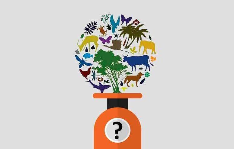 биосфера, живое вещество, организмы, растения, животные, флора и фауна, масса, вес, иллюстрация