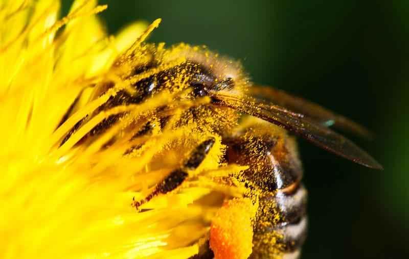 Как пчелы делают мед? Краткое описание процесса, фото и видео 3