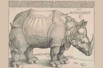 Носорог, животное, гравюра Дюрера, изображение