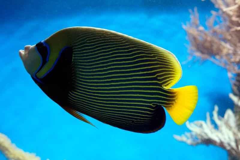 Какие виды рыб обитают в Красном море - названия, фото и характеристика 4