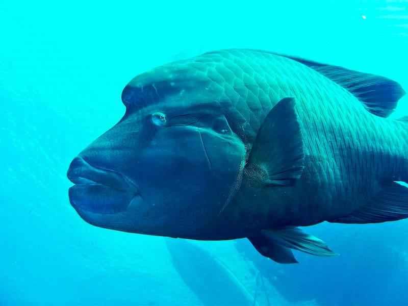 Какие виды рыб обитают в Красном море - названия, фото и характеристика 2