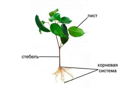 Особенности корневой системы растений - типы, примеры и значение 2