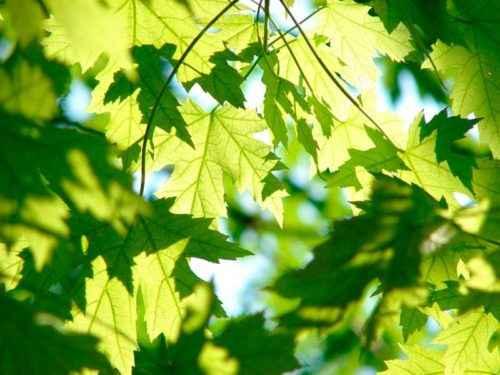 Из каких основных частей состоят растения? Названия, описание, свойства и значение 4