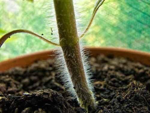 Из каких основных частей состоят растения? Названия, описание, свойства и значение 3