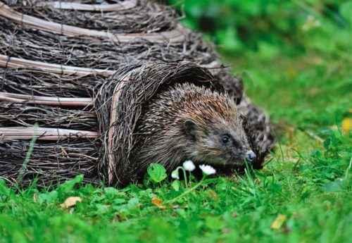 Какие животные впадают в спячку зимой? Список, характеристика и фото 6