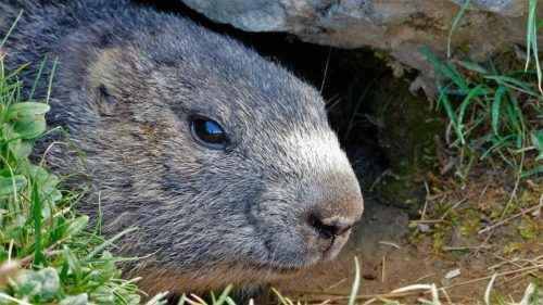 Какие животные впадают в спячку зимой? Список, характеристика и фото 4