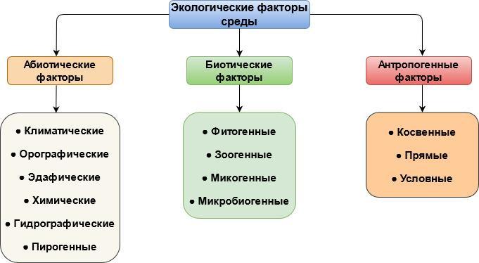 Экологические факторы окружающей среды - схема, виды, примеры и адаптация организмов 2