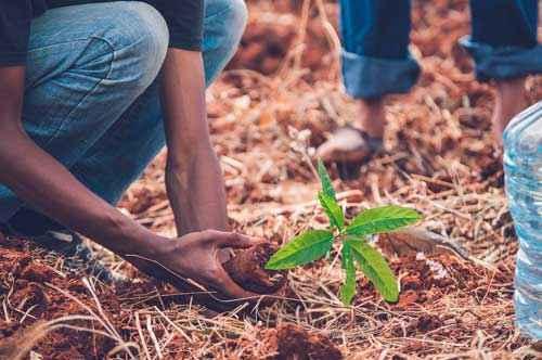Глобальное опустынивание - факторы, последствия и пути решения проблемы 3