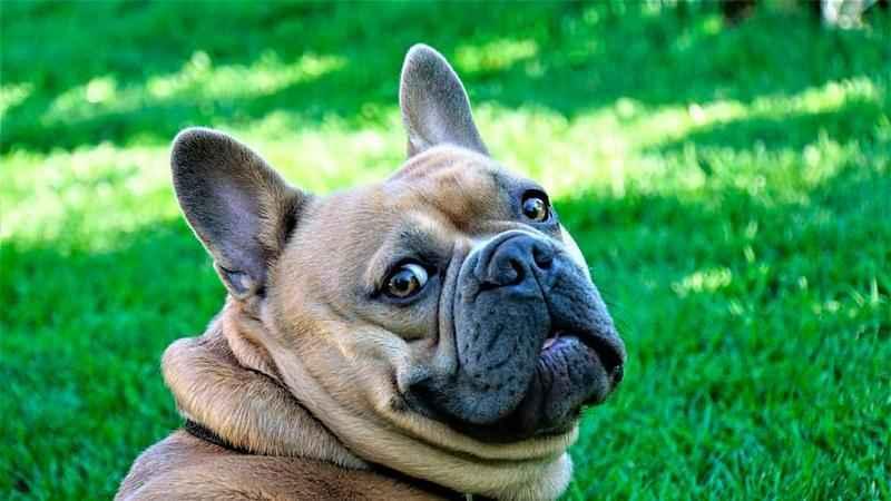 Зачем собака бегает за своим хвостом? Основные причины 3