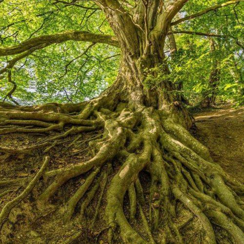 Особенности корневой системы растений - типы, примеры и значение 4