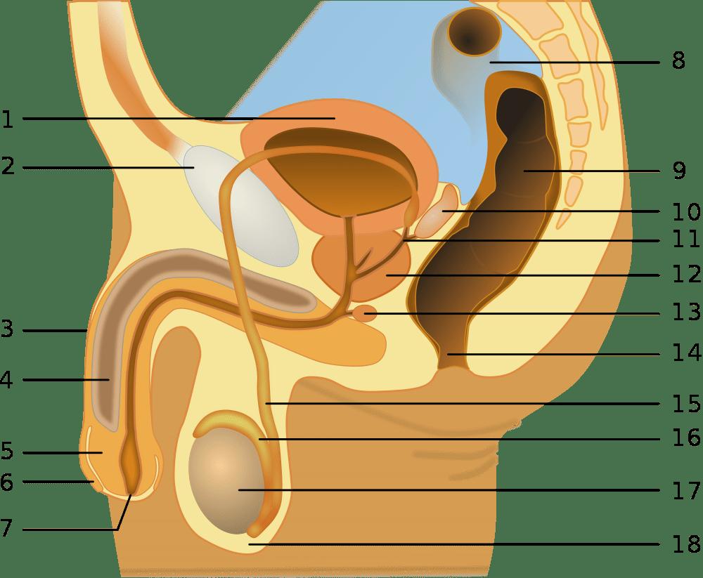 Особенности анатомии тела человека 8