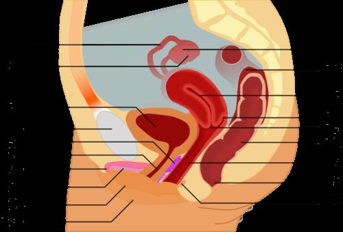 Особенности анатомии тела человека 7