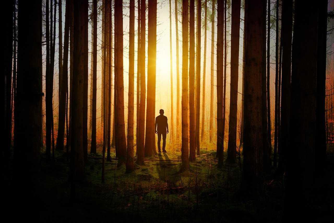 лес, человек, деревья, растения, природа, свет, силуэт