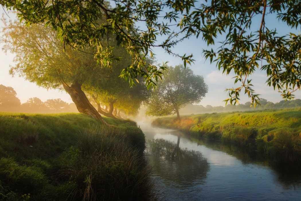 природа, река, ручей, вода, утро, туман, деревья, трава, зелень